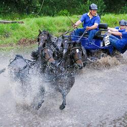 Snelle paardjes