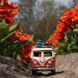 Rijden tussen de tulpen