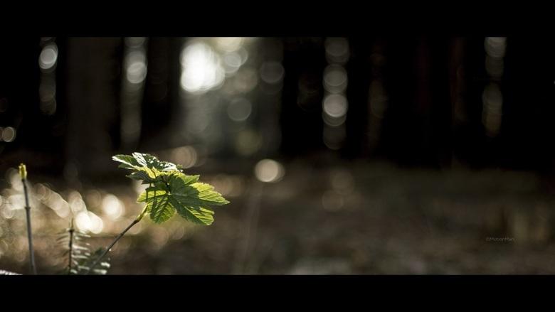 Avondzon - Was een mooie dag vandaag. Nog even snel het bos in geweest bij het late middaglicht. Tussen alle bomen door scheen de zon nog mooi op dit