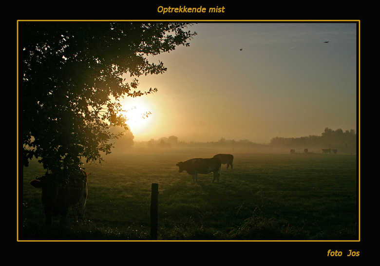 optrekkende mist - Zaterdagmorgen rond 08.30. De zon warmt al een beetje op en laat de mist verdwijnen. 'n boerenlanschap aan de rand van Woezik