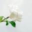 Maagdelijk wit