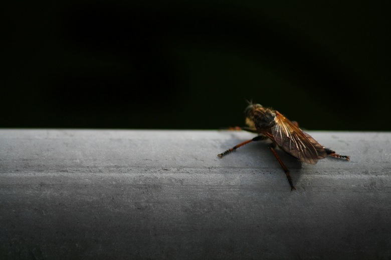 Insect - .