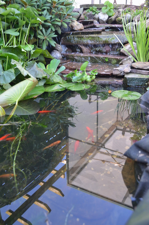 Vijver met waterval zd41 belbin info for Vissen vijver