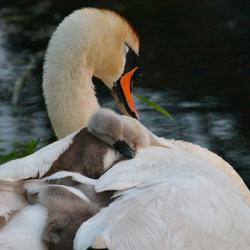 Moederliefde..!