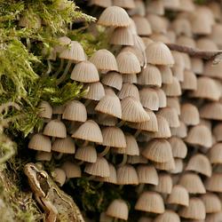 Kikker schuilt onder de paddenstoelen