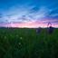 Natural habitat of the wild Fritillary at sunset.