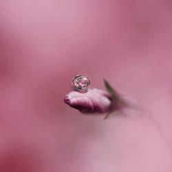 Reflectie in een waterdruppel