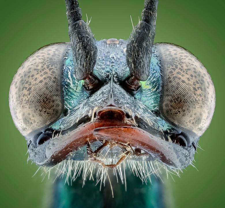 KakkerlakkenDoder.. -