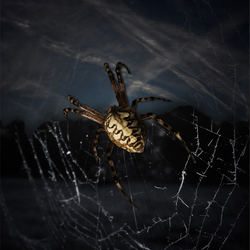 Spider@Night
