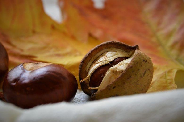 herfst - Mooie herfst kleuren en herfst materiaal naar binnen genomen om aan de slag te gaan met de camera