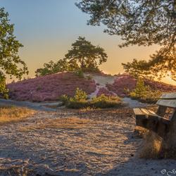 Sunrise Brunssummerheide