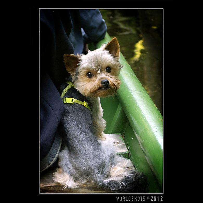 huh? - Het hondje zat voor me op een bankje in een bootje en keek verschrikt om toen ik hem riep...