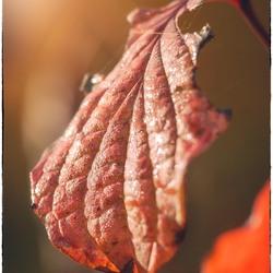Autumn Leaves, part II