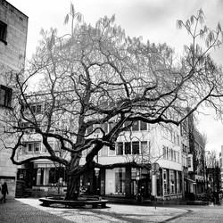 Mooiste boom van Heerlen!