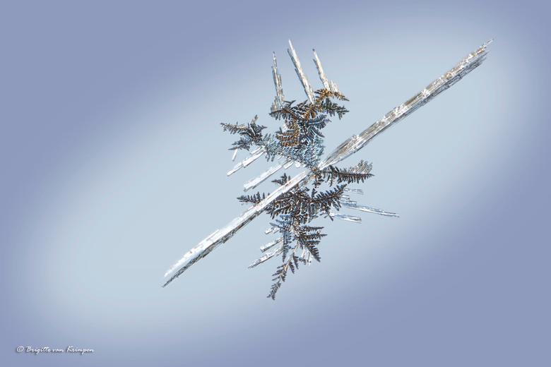 Ice needles - Iedereen dank voor de fijne reacties op mijn eigen website.<br /> Weer even terug naar de winter, dat is het gelukkig nog, al zou je he