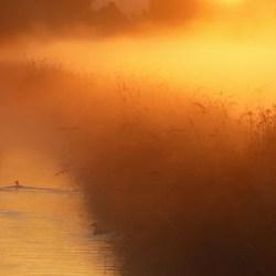 gouden morgen