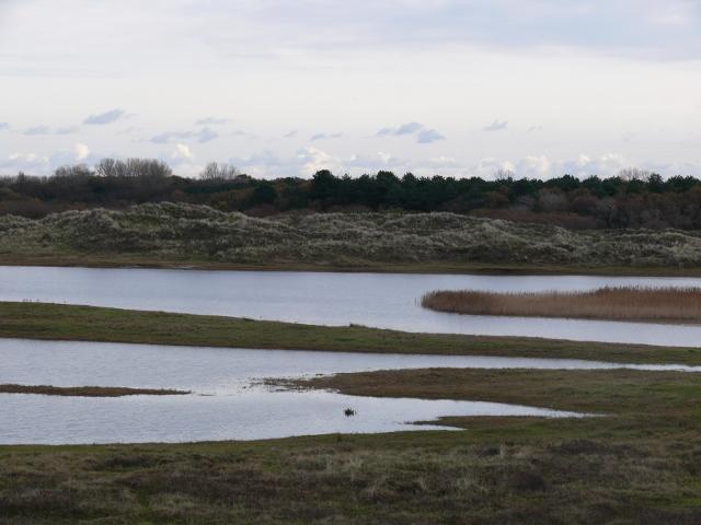 Grafelijkheidsduinen Huisduinen - In natuurgebied Huisduinen (Den Helder) is deze foto genomen.