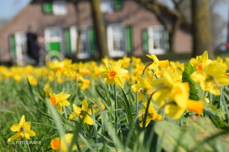 Lente in Rouveen -