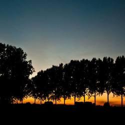 Sunset Betuwe