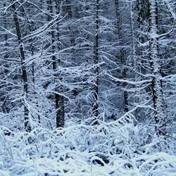 winter paradijs