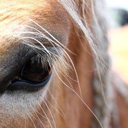 Door de ogen van het paard