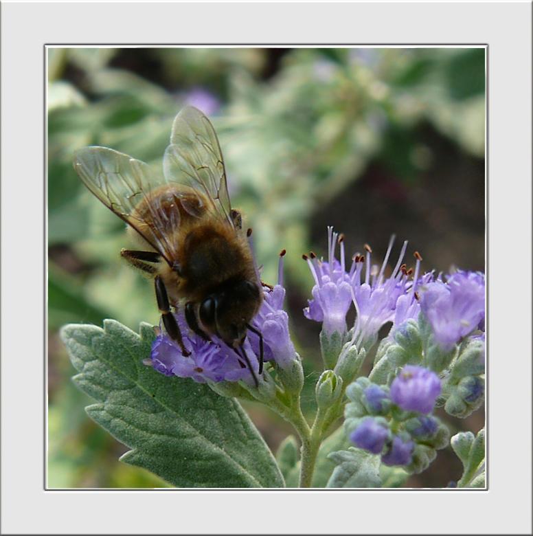 So sweet - Je ziet ze gelukkig nog volop de bijen.<br />