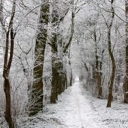 Winters-landschap