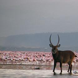Kenia Lake Nakuru National Park