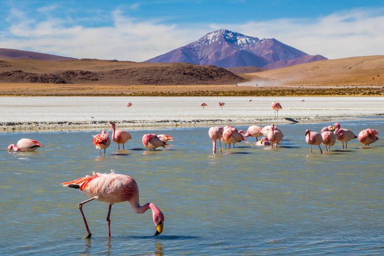 Flamingo's bij Laguna Hedionda - Dit zoutmeer in Bolivia ligt op 4.121 m. hoogte. Het is een unieke plek op aarde, onder andere door de Andesflamingo