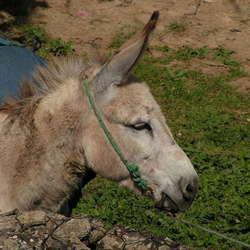 Ezeltje in Marokko