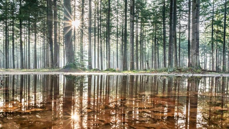 Mirror in the wood - Er is heel wat regen gevallen de afgelopen tijd