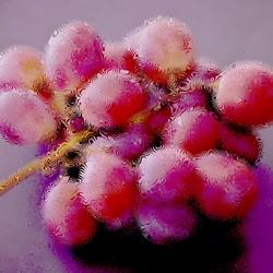 Al zij de druiven nog zo zuur