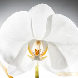 Orchidee 2018