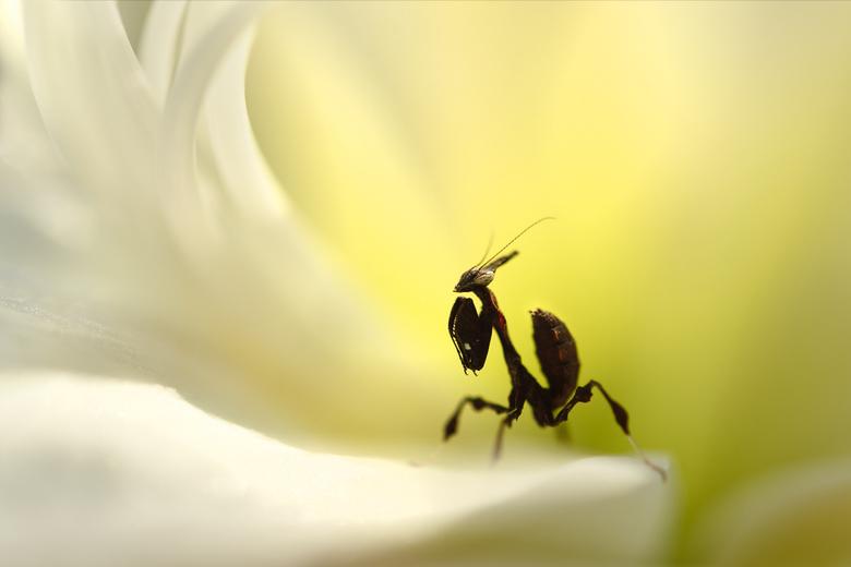 Inside the flower... - lijkt me een prachtig plekje om te zijn!
