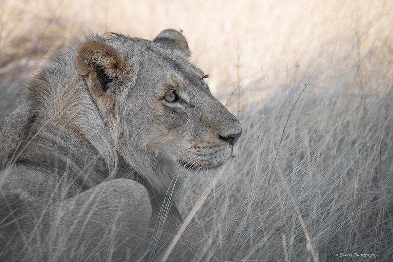 Kruger , Zuid Afrika . - Foto gemaakt tijdens groepsrondreis .