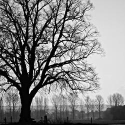 Onder de lindeboom