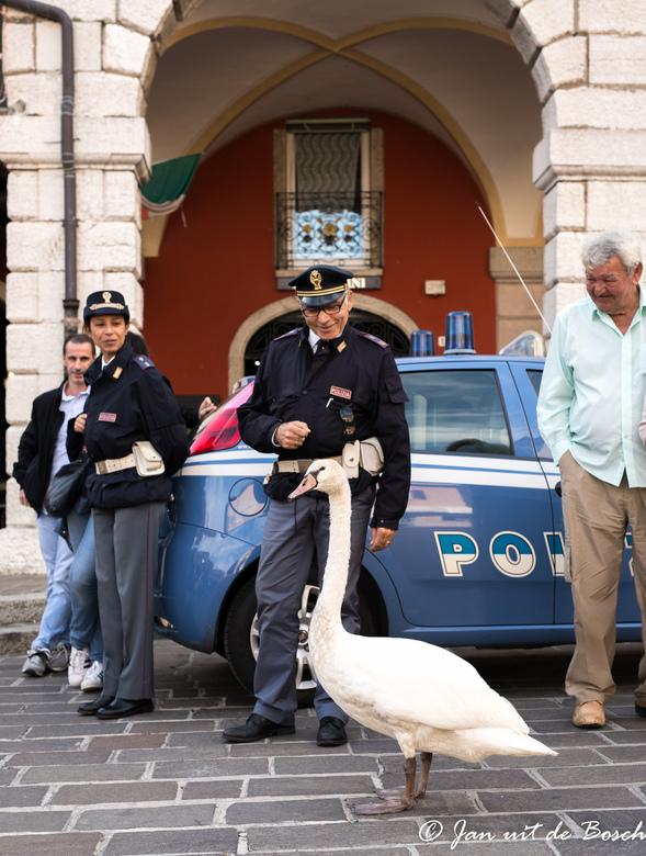 arrestatie   in uitvoering