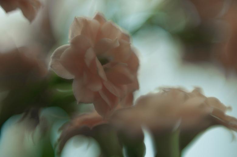 Soft colors - Macro bloem