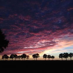 SunsetBorger
