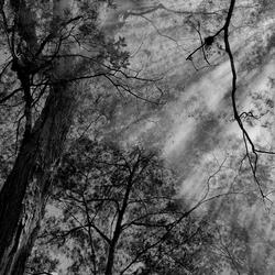 Stralend bos