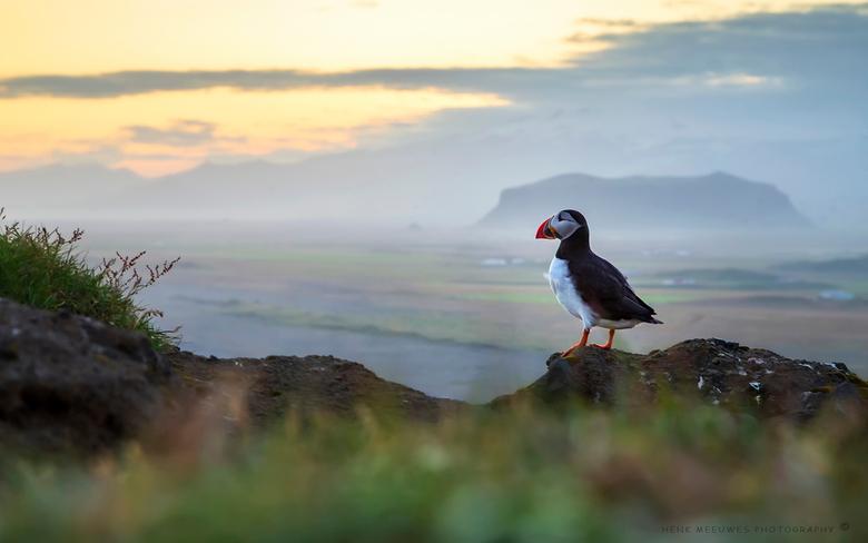 A view to remember - Dit beeld heb ik nog altijd op mijn netvlies.<br /> Geschoten in IJsland bij Vik.<br /> De papegaaienduiker zou er in augustus