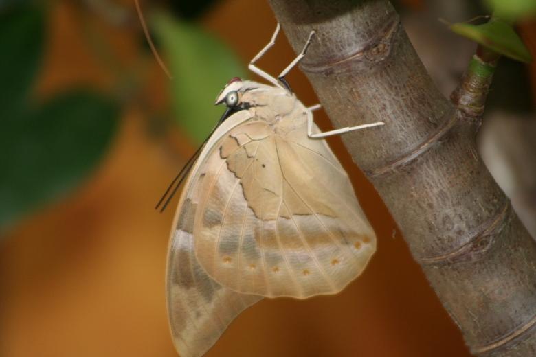 Vlindertje... -
