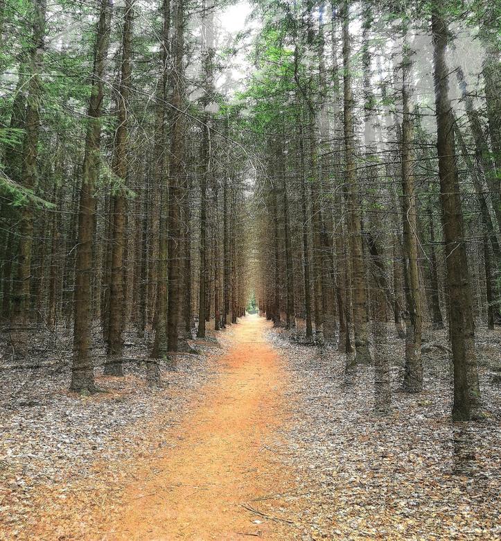 Bos-dubbele belichting - bos in Drenthe. door de dubbele belichting wordt de diepte van het bospad nog meer benadrukt