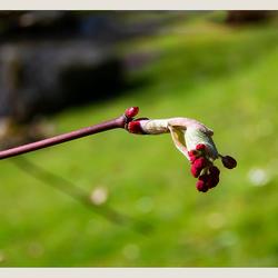 Lente in de Japanse tuin 3