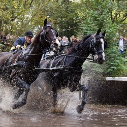 Spectaculaire paardensport ...