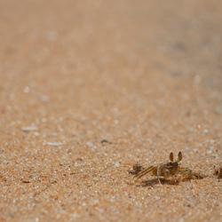 Spookkrab op het strand
