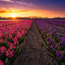 Spring fields 2.0