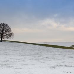 Winterscapes - boom