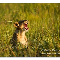 sunset yawn