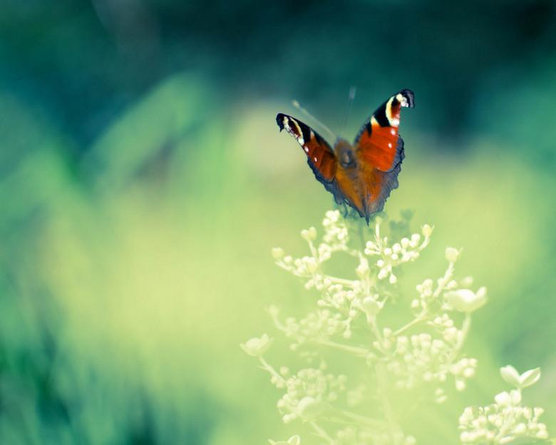 Sweet Summer - Garden full of butterflies